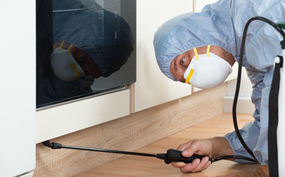 Deratizare Oradea. Specialist aplica substanta chimica in apartament pentru indepartarea gandacilor.