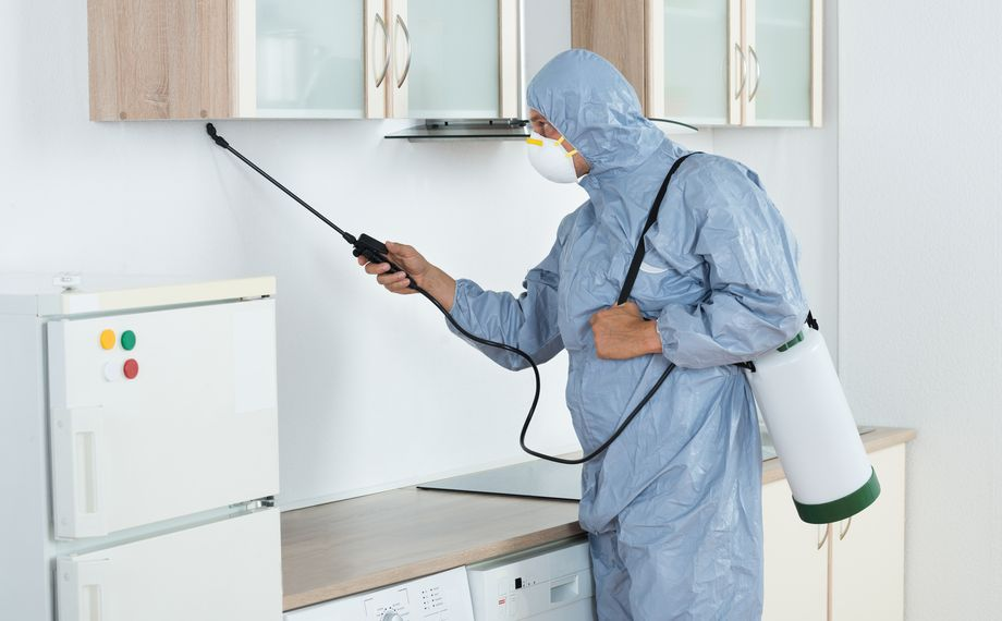 Deratizare Oradea. Specialistul Roxadera aplica substante chimice in vederea combaterii mustelor in bucatarie.